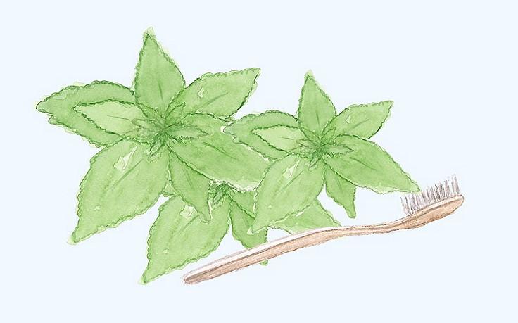 Grüne Kosmetik zum Selbermachen: Minz-Zahnzucker