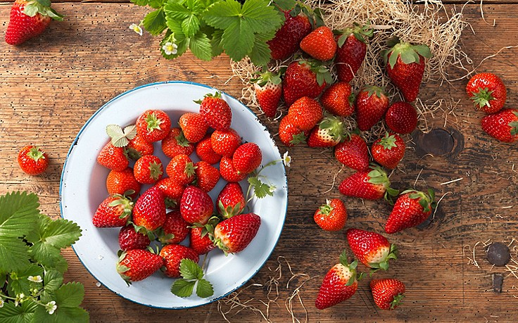 Käfers Gartentipps: So finden Sie die richtige Erdbeersorte für Garten und Balkon