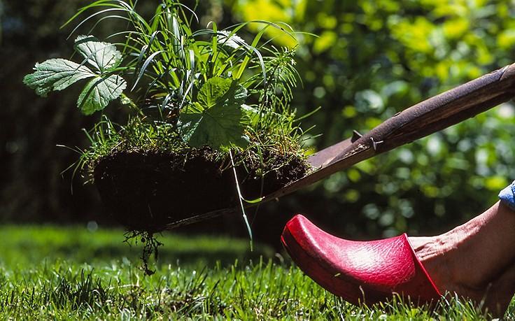 Käfers Gartentipps: Häufige Gartenirrtümer