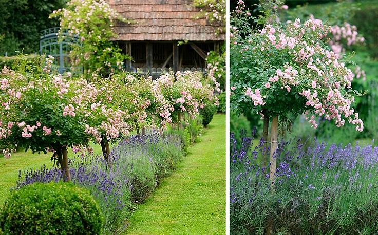 Lavendel und Rosen.