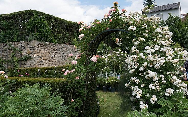Inspiration für den Garten: Rosen als Blickfang