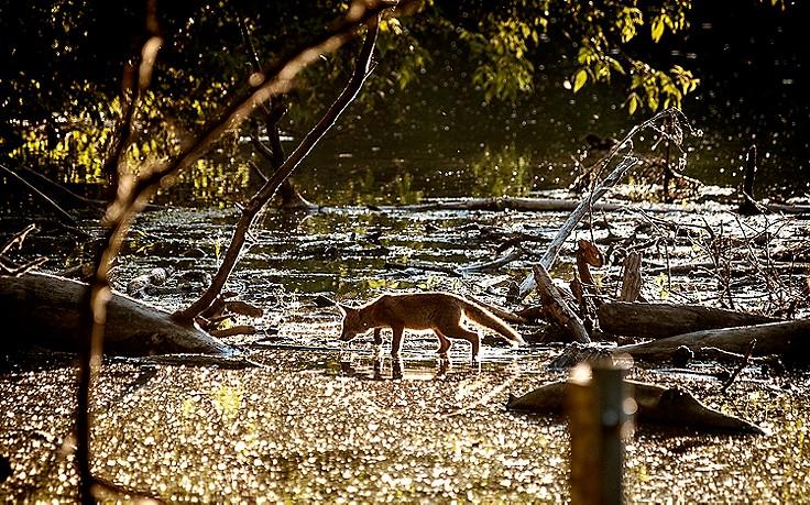 5 Tipps für den Auwald-Dschungel östlich von Wien