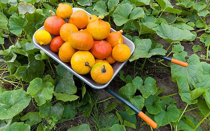 Was im Nutzgarten im September zu tun ist