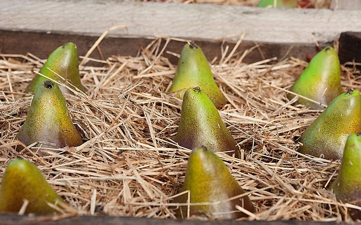Was im Nutzgarten im Jänner zu tun ist