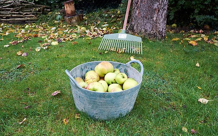 Was im Nutzgarten im Oktober zu tun ist