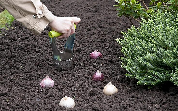 Im September wird der Frühling eingepflanzt