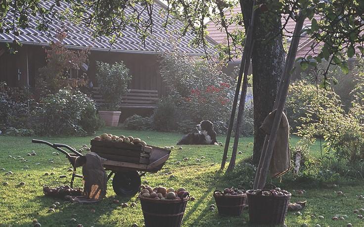 7 Dinge, die im herbstlichen Garten zu tun sind