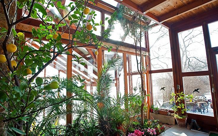 Käfers Gartentipps: Kübelpflanzen richtig einwintern
