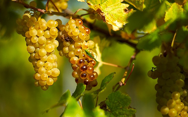 4 Adressen für Wiener Wein