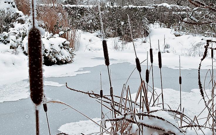 Wie man verhindert, dass der Teich zufriert