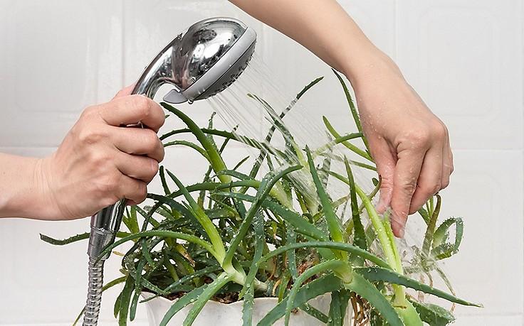 Februar-Tipp Nr. 2: Pflegekur für Zimmerpflanzen