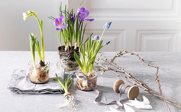 "Februar-Gartentipp Nr. 5: Zwiebelblumen ""retten"""