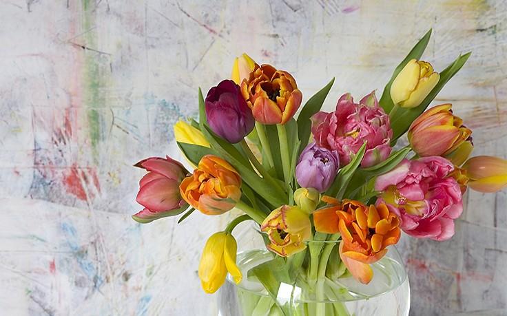Käfers Gartentipps: Valentinstags-Blumenwissen