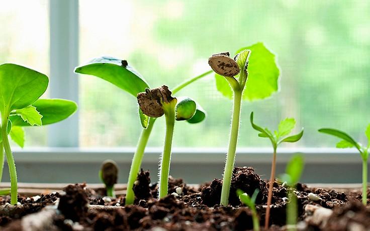 Gärtnern am Fensterbrett
