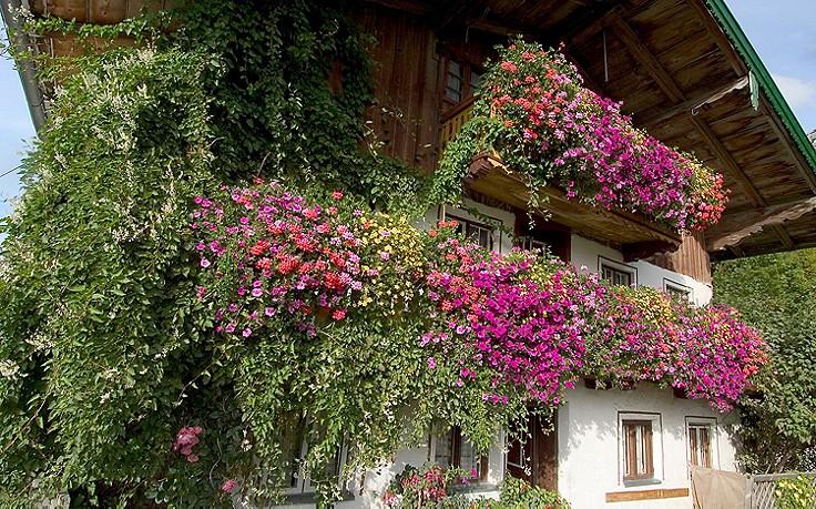 Inspiration für daheim: Blühende Fassade