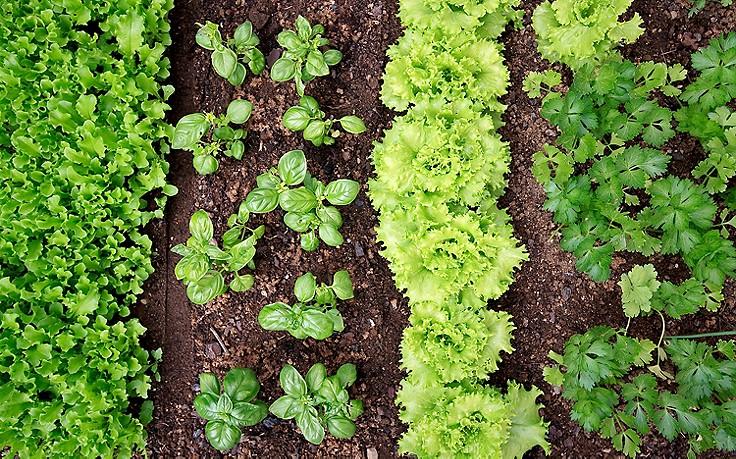 9 goldene Regeln für eine gesunde Gartenerde