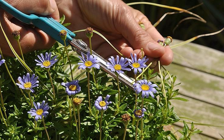 August-Gartentipp Nr. 2: Sommerpflege für Topfpflanzen