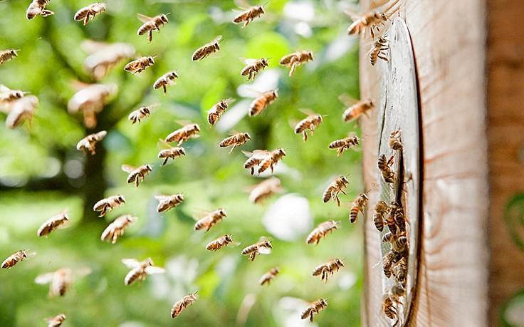 schnelle hilfe bei insektenstichen und verletzungen durch. Black Bedroom Furniture Sets. Home Design Ideas