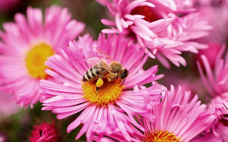 Einen Garten für Bienen anlegen