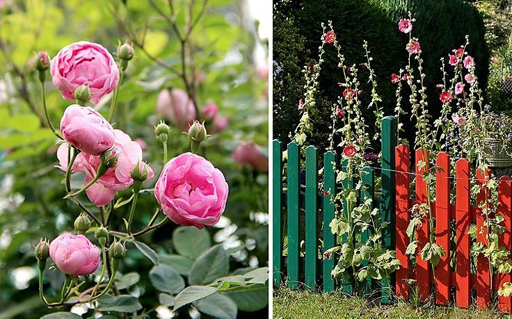 Rosen und Stockrosen im Bauerngarten