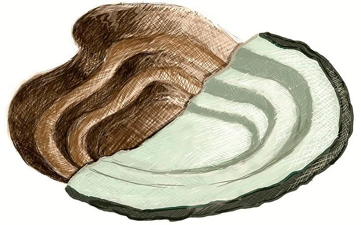 Sechs Schritte zum Bioteich