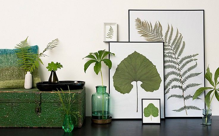 Getrocknete Blätter in Bilderrahmen