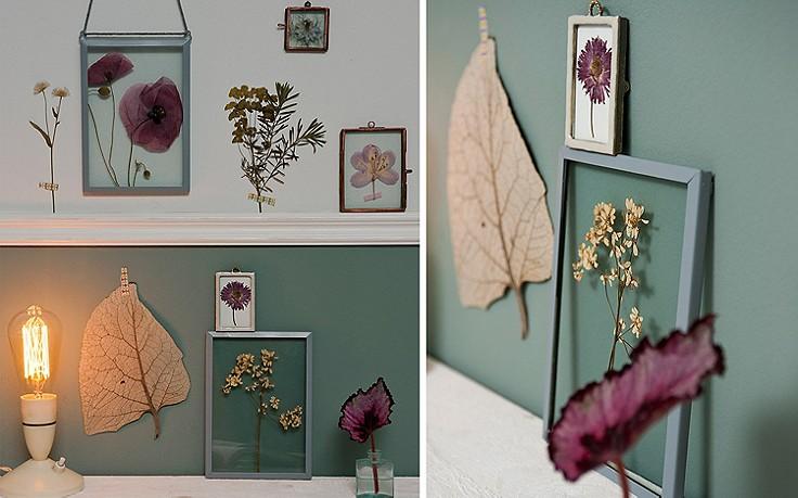 Gepresste Blumen zwischen Glas und an der Wand