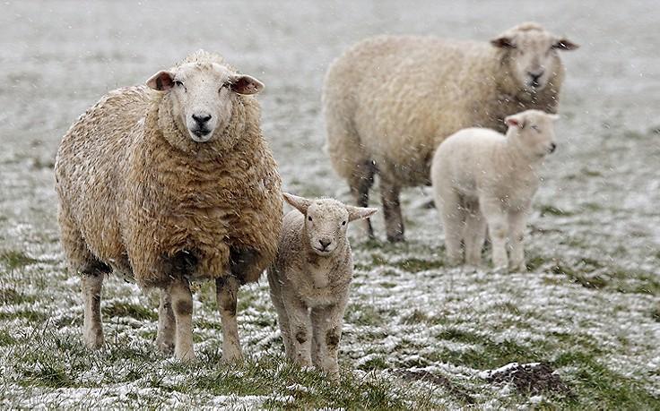"""Kälteeinbruch: Wann die sogenannte """"Schafskälte"""" wieder vorbei ist"""