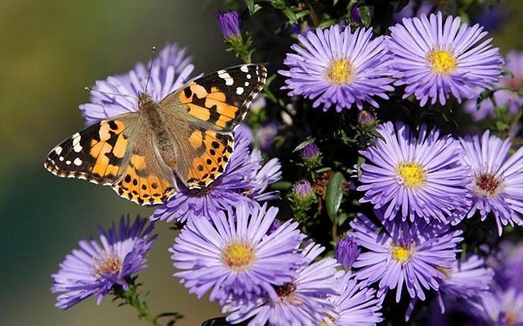 Ein Beet für Schmetterlinge anlegen