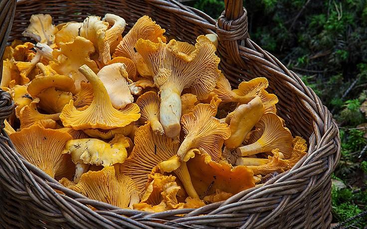 5 Tipps fürs Pilze sammeln