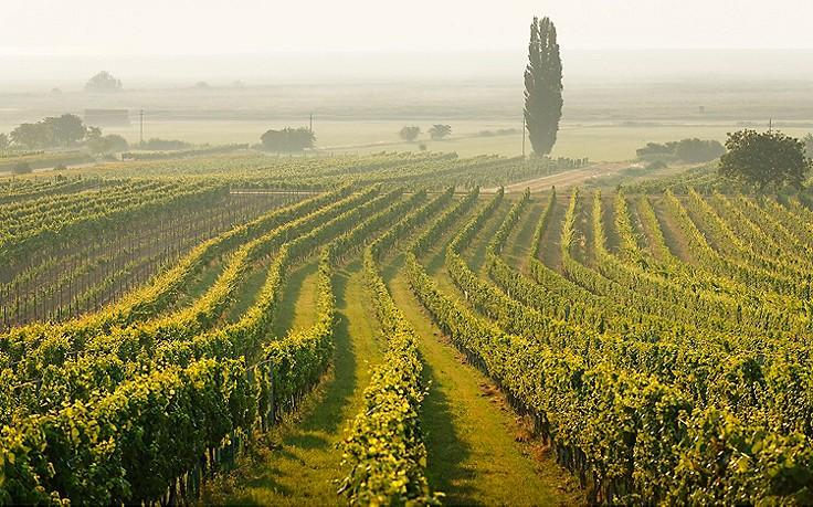 Weinwanderweg MOOST zwischen Oggau und Rust