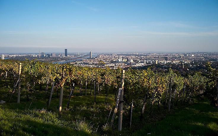 Weinberger über Wien