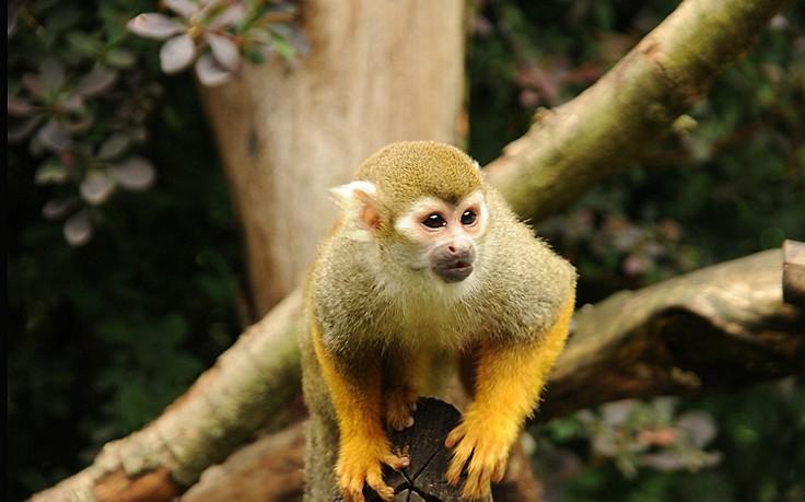 Zoo-Einbrecher wird von Affen verprügelt