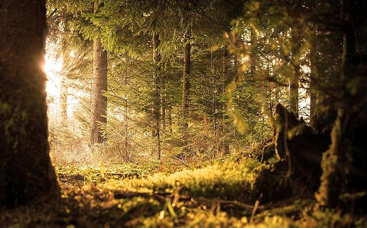 5 Schmerzstiller aus der Natur