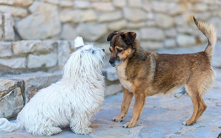Hunde beim Beschnuppern