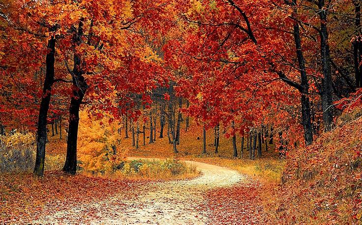 Herbstnatur