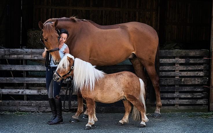 Frau mit Pferd und Pony
