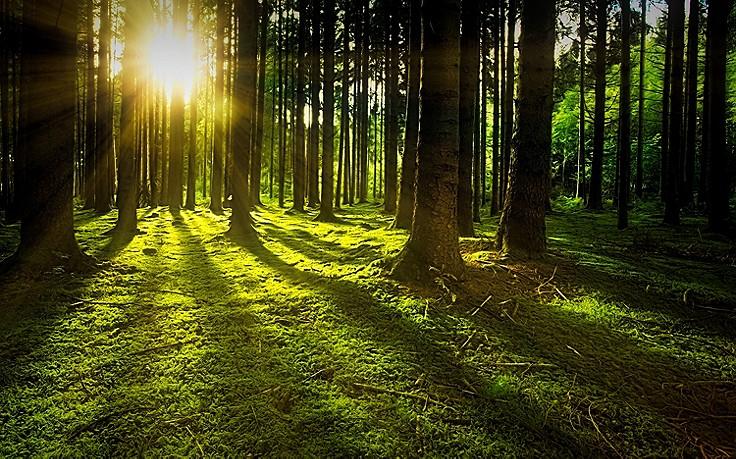 So heilsam ist Baden in der Waldluft