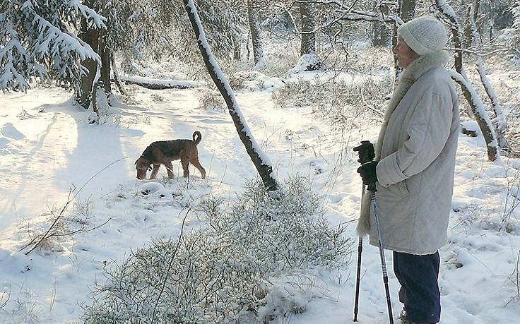 Hundespaziergang