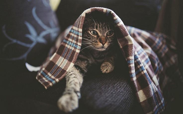 So hilft man Hund und Katz zu Silvester
