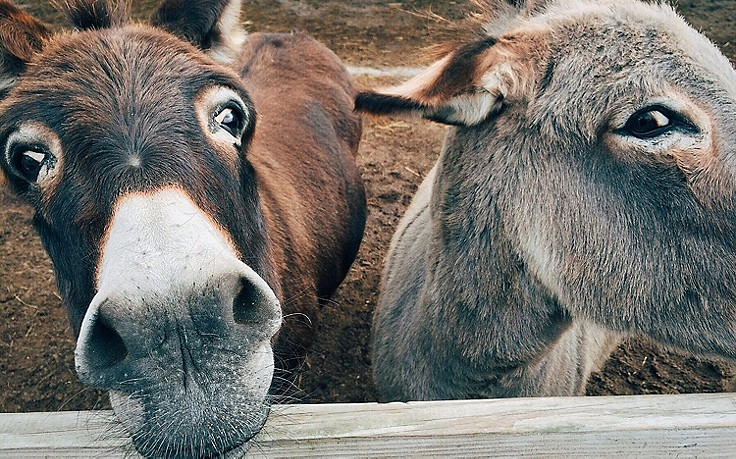 Griechenland schützt Esel vor übergewichtigen Touristen