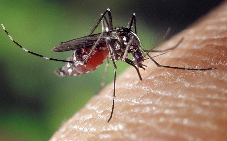 Gefährliches West-Nil-Virus: Schon 71 Tote in Europa