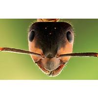 diese insektenstiche sollte man erkennen. Black Bedroom Furniture Sets. Home Design Ideas