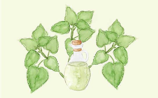 Grüne Kosmetik zum Selbermachen: Zitronenmelisse-Körperspray