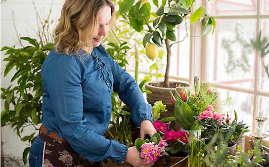 Die richtige Überwinterung von Kübelpflanzen