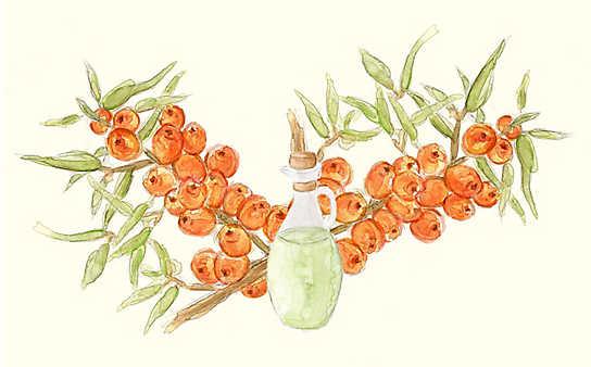 Grüne Kosmetik zum Selbermachen: Sanddorn-Hautlotion