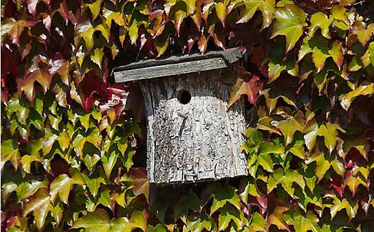 Was zu tun ist, damit sich Vögel im Frühling daheim fühlen