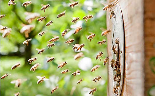 Schnelle Hilfe bei Insektenstichen und Verletzungen durch Pflanzen