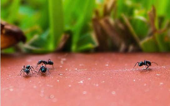 Was tun bei ... Ameisen?