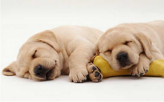 10 Fakten über Hunde, die Sie überraschen werden